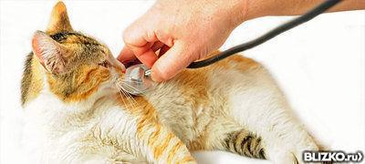Где в екатеринбурге кастрировать кота